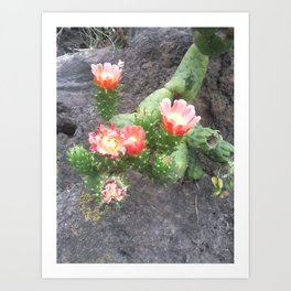 A cactus in its bloom Art Print