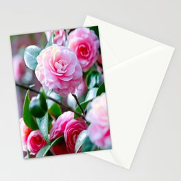 Pink Camelias Stationery Cards