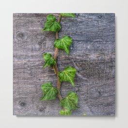Ivy on Wood Wallpaper Metal Print