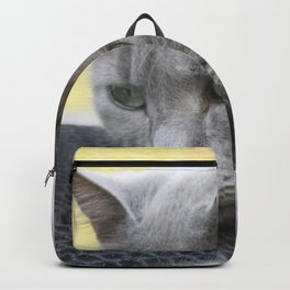 Gorgeous Grey Cat Photo Portrait Backpack