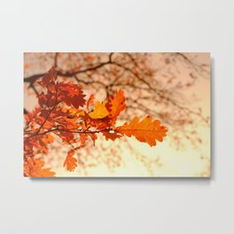 Oak Leaves with Sunset Metal Print