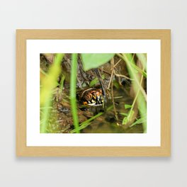 Box Turtle and Tadpoles Framed Art Print