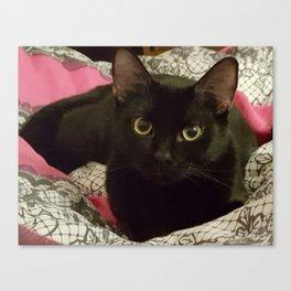 A Black Cat's Love Canvas Print