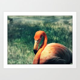 Flo the Flamingo Art Print