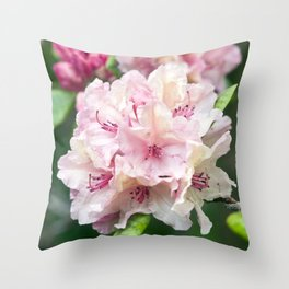 PINK BLOSSOM of RHODODENDRON Throw Pillow
