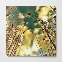 Golden Stalks  Metal Print