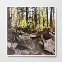Forest at Ground Level (instagram) Metal Print