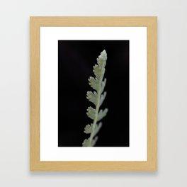 Pale Green Framed Art Print
