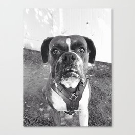 Black & White Boxer Dog Canvas Print