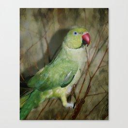 Indian Ringneck Parrot - Cherokee Canvas Print