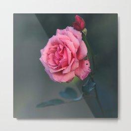 Rose - Pink Beauty Metal Print