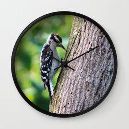 Woodpecker Hunting For Food Wall Clock