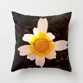 Crown Daisy Flower Closeup Throw Pillow