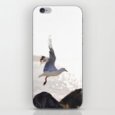 Seagull takes flight over Dunedin's MacAndrew Bay iPhone & iPod Skin