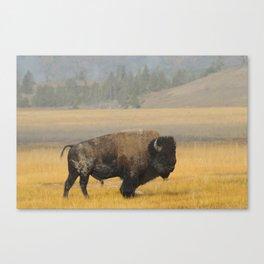 Buffalo at Yellowstone #1 Canvas Print