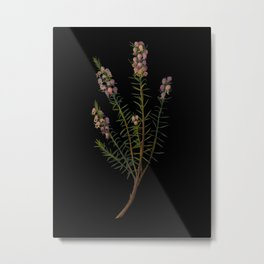 Erica Mediterranea by Mary Delany Paper Collage Floral Flower Botanical Mosaic Vintage Scientific Plant Anatomy Metal Print