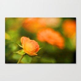 MS Rose Canvas Print