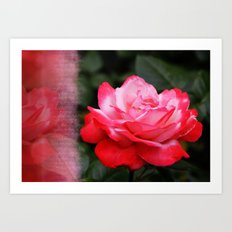 Letter from a Rose Art Print