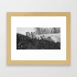 Fox Kits Sketch Framed Art Print