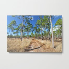Dirt road through a pine forest Metal Print