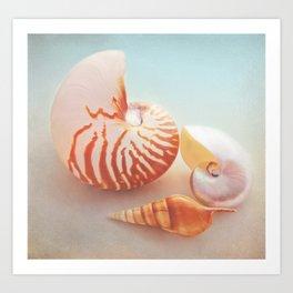 Nautilus collage Art Print