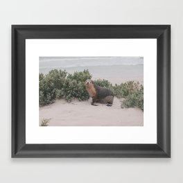 seal! Framed Art Print