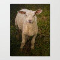 lamb Canvas Prints featuring Lamb by Guna Andersone & Mario Raats - G&M Studi
