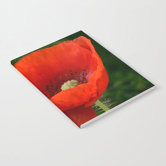 Poppy by rinadevine