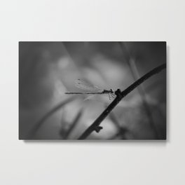 Dragon(fly) Metal Print