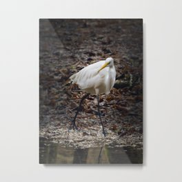 Egret Strutting Metal Print