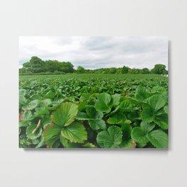 strawberry field Metal Print