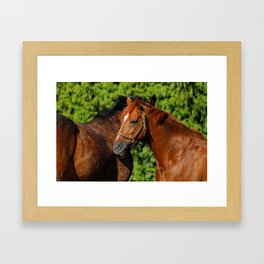 Lean on Me: Two Friends in the Summer Sun Framed Art Print