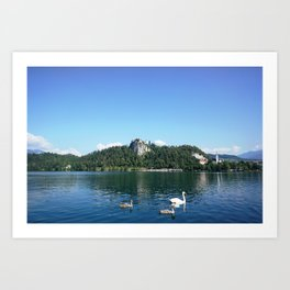 Swans in Bled Art Print