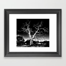Biloxi Tree Framed Art Print