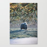 grass Canvas Prints featuring Grass by John Turck