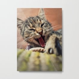 Close up vertical portrait of funny lazy striped cat, sleepy yawning as laying down outdoors. Metal Print