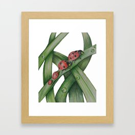 Lady Bug Family Framed Art Print