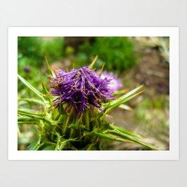 Flower Aechmea Art Print