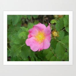 Wild South Dakota Rose Art Print