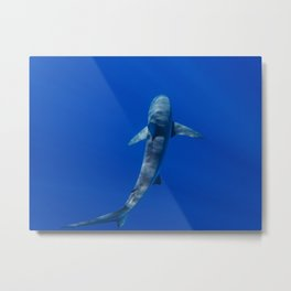 Hawaiian Shark II Metal Print