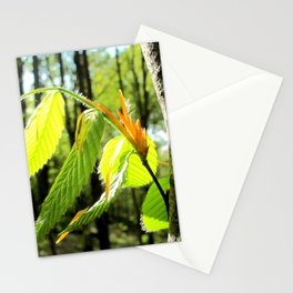 Tender and Mild Stationery Cards