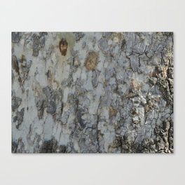 TEXTURES -- California Sycamore Bark Canvas Print