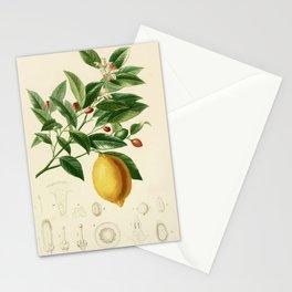 Vintage Lemon Tree Illustration Stationery Cards