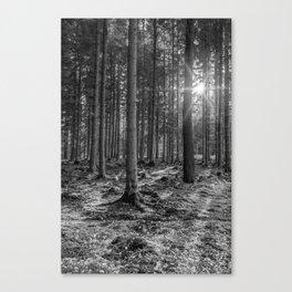 Spruce Sunbeams Canvas Print