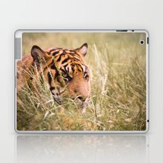 Tiger in the grass Laptop & iPad Skin