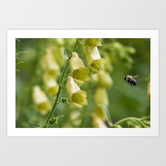 Busy Bee in The Foxglove (Yellow) Art Print
