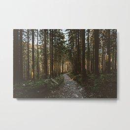Pathway to Wilderness Metal Print