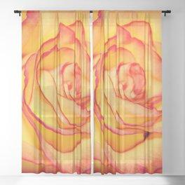 Orange Rose Sheer Curtain
