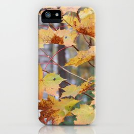 Maple tree in fall colors iPhone Case