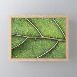 photosynthesis Framed Mini Art Print